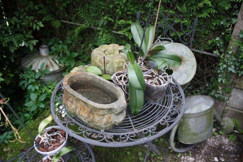 Orchidees sur table de jardin