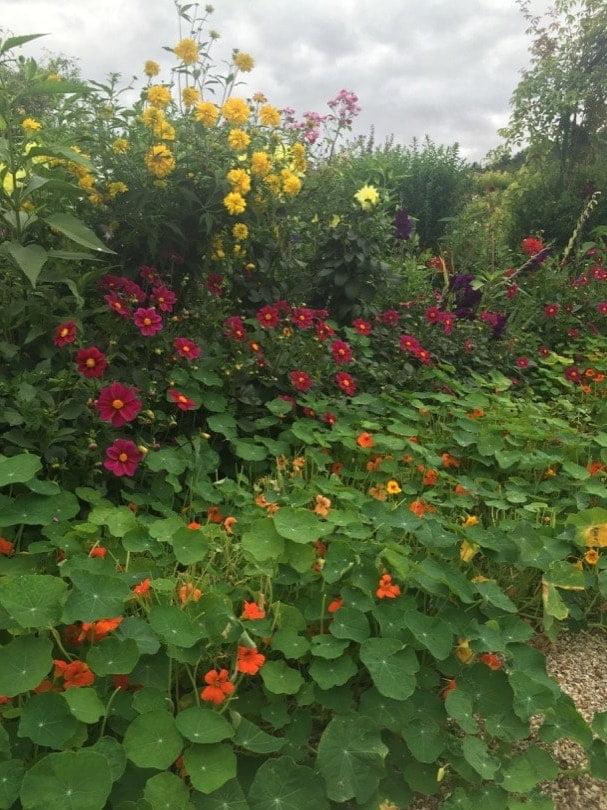Capucines, dahlias, glaïeuls, poésie à Giverny