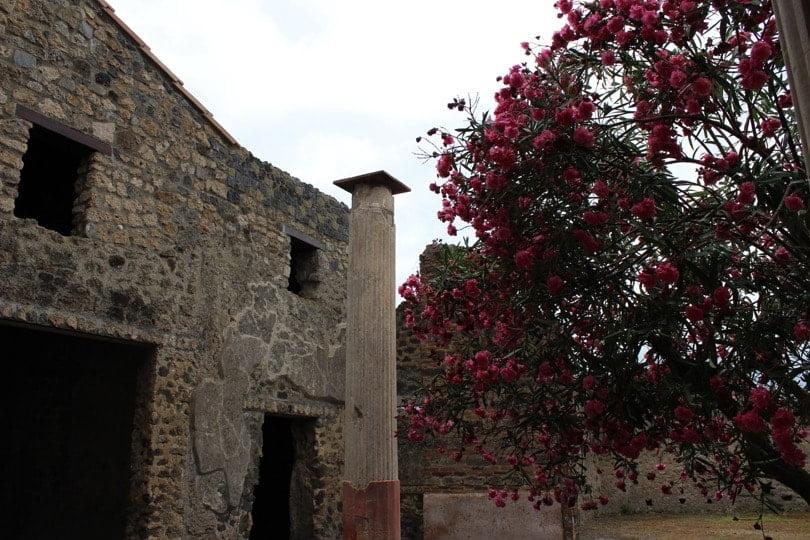 maison et laurier pompei