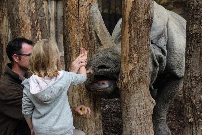 rose avec le rhinoceros