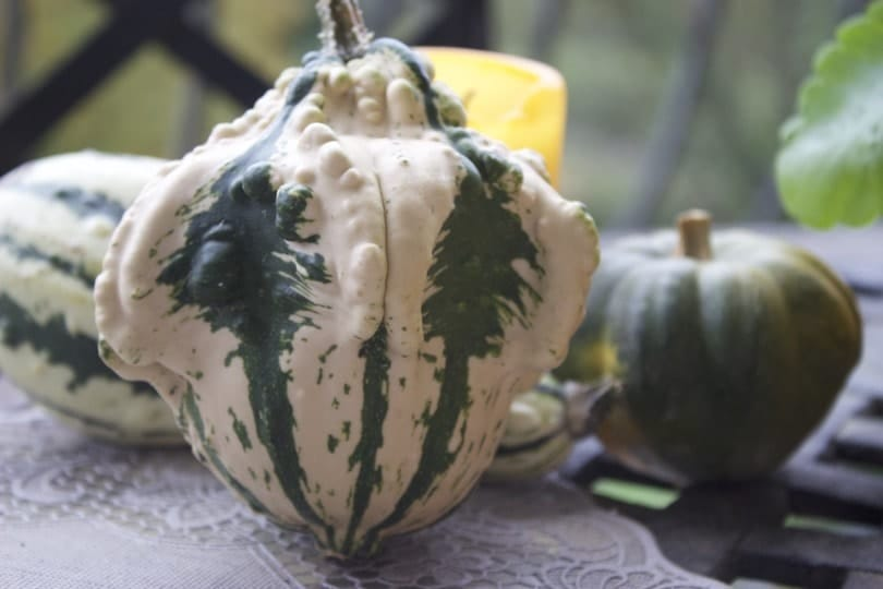Une courge effrayante pour Halloween