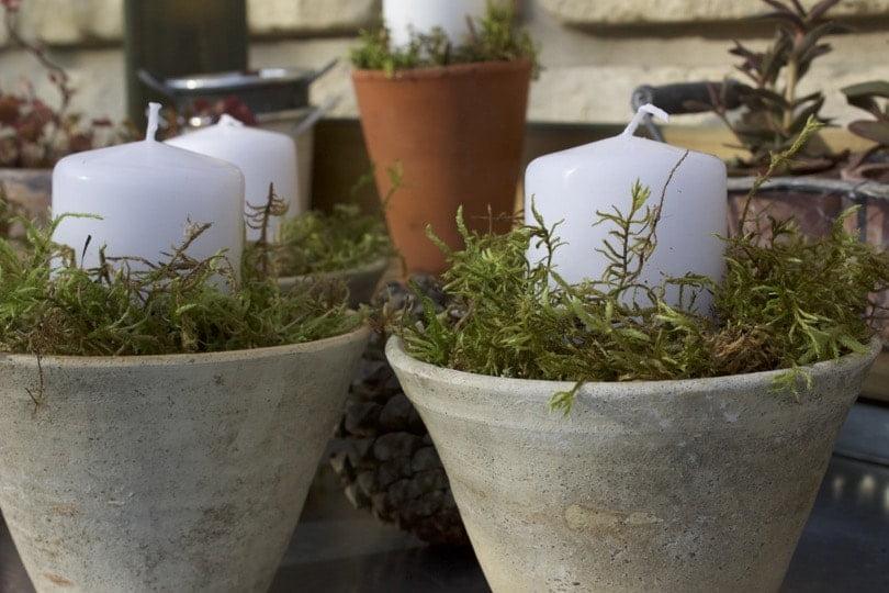 pots des landes et pots en terre avec mousse