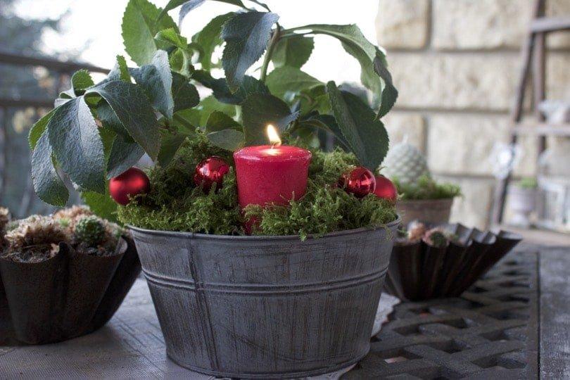 composition avec des roses de Noël