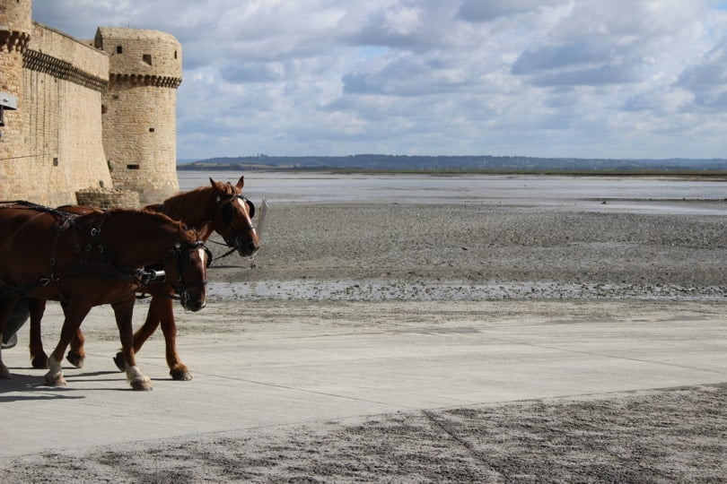Chevaux du Mont Saint-Michel
