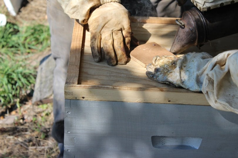 Enfumer le dessus de la ruche