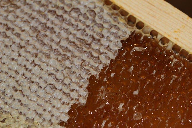 Miel sur cadre