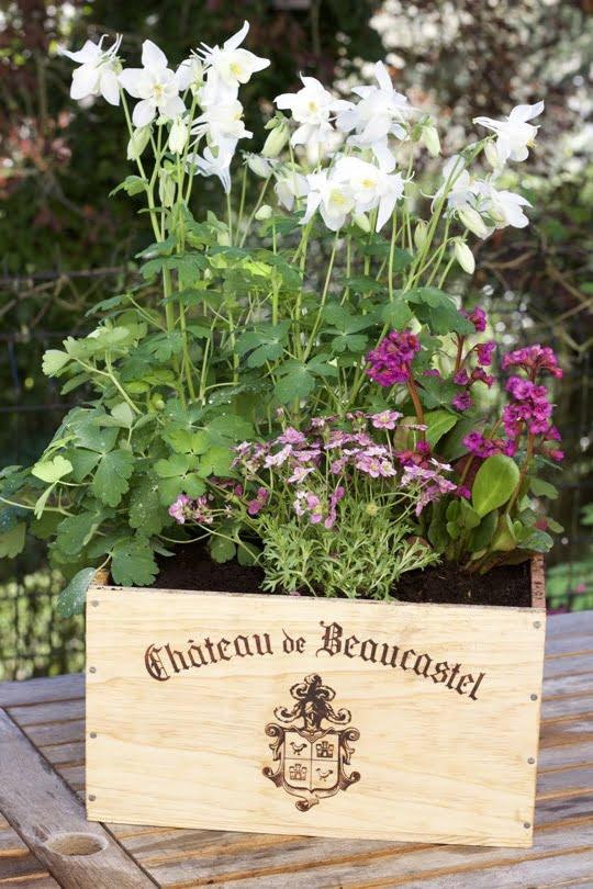 Ma caisse cottage, un jardin dans une caisse à vin