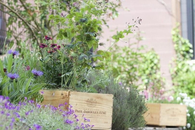 mini-jardin dans des caisses à vin