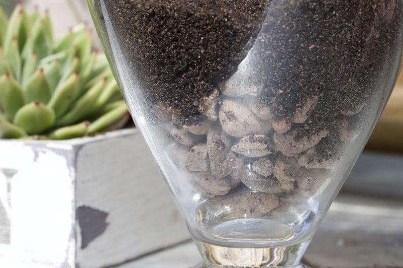 Billes d'argile et terreau pour terrarium en verre