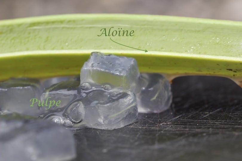Aloïne et pulpe de l'Aloe vera