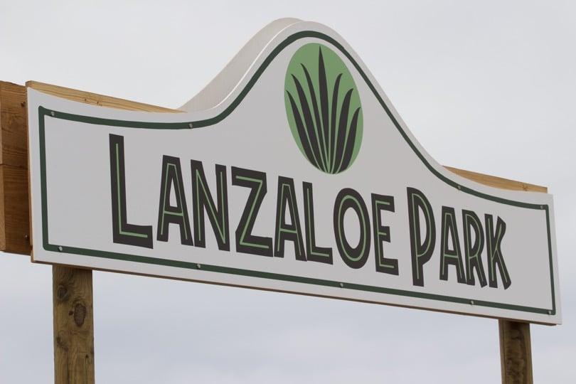 Plantation d'Aloe vera de Lanzarote aux Canaries