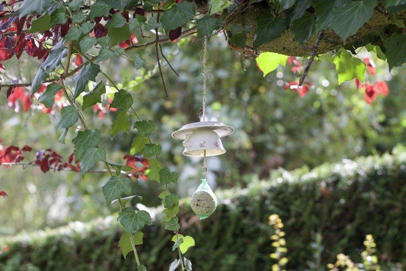 Tasse mangeoire suspendue dans mon arbre