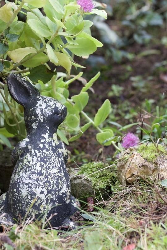 le lapin surveille les plantations