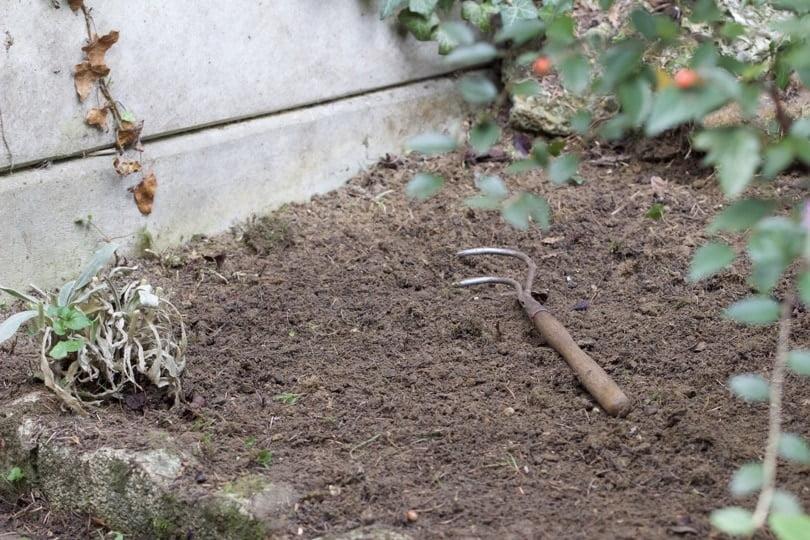 La partie ombragée de mon jardin pour recevoir les cyclamens