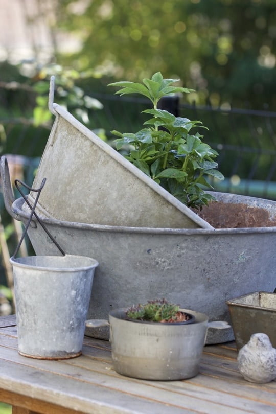 Objets en zinc pour plantations d'automne