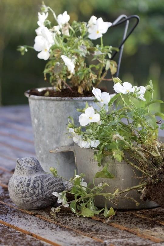 Les pensées des jardins