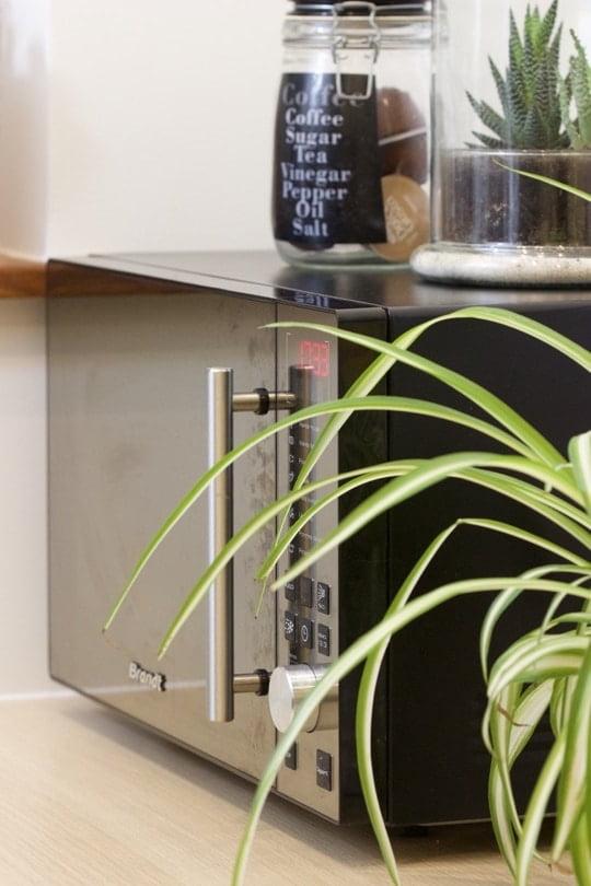 Les plantes dépolluantes contre la pollution électromagnétique.