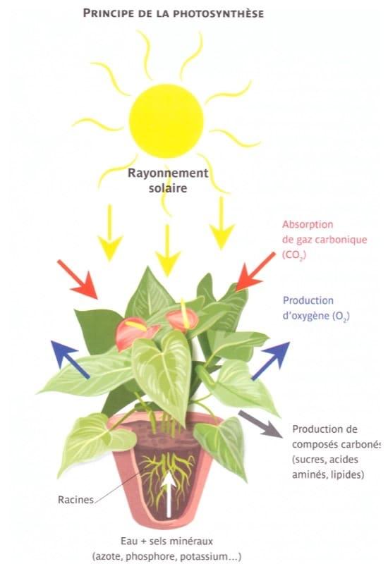 Principe de la photosynthése.