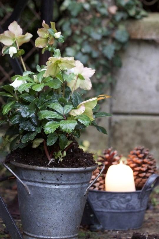 Mon jardin transformé pour accueillir Noël dans une ambiance Shabby chic