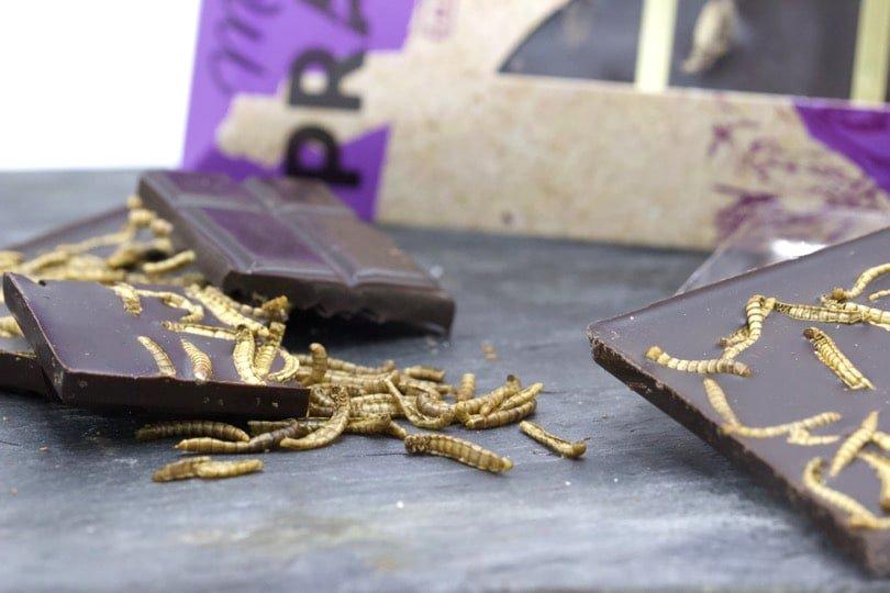 Manger des insectes - Ténébrions meuniers déshydratés et chocolat noir