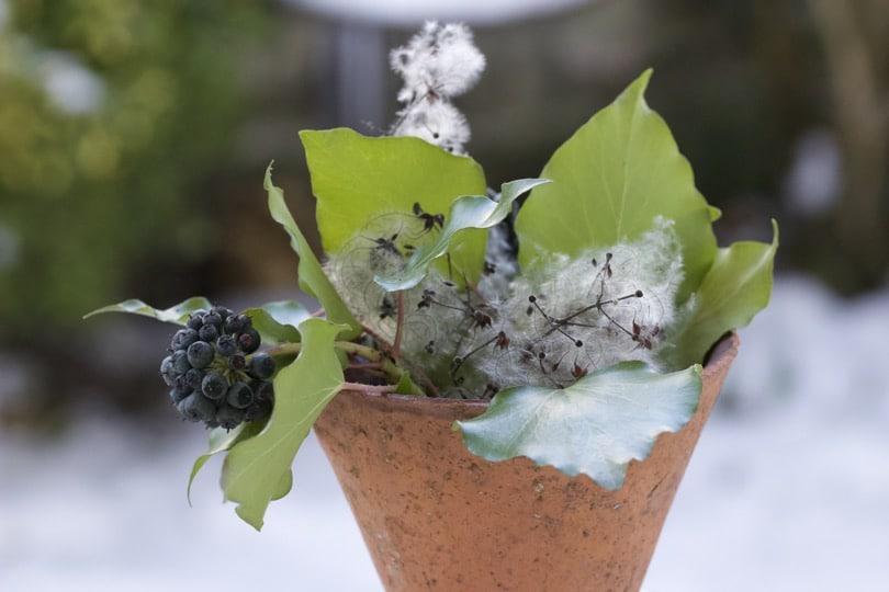 Un bouquet d'hiver sur fond de neige