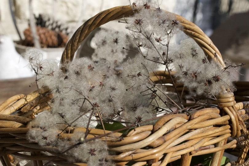 Réaliser un bouquet d'hiver