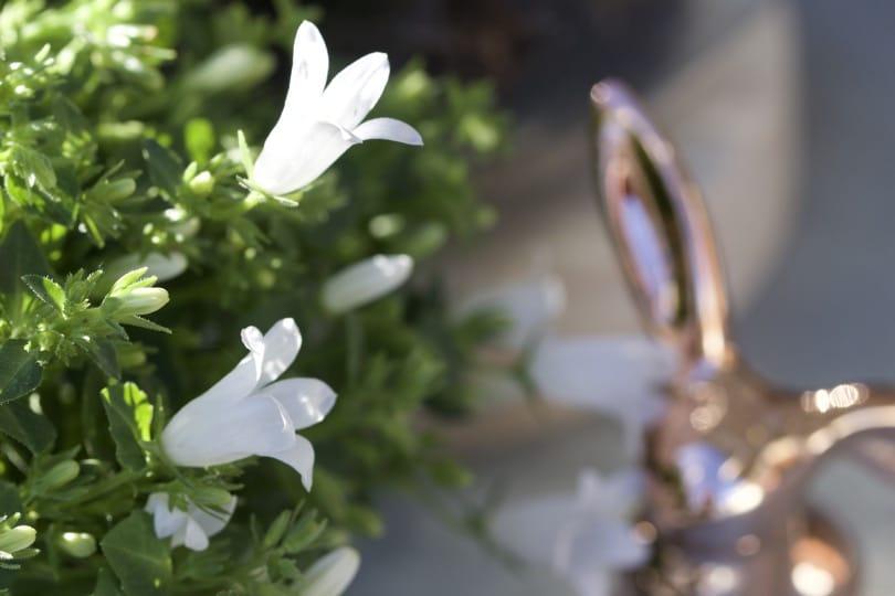 Des campanules pour une décoration de Pâques trop mignonne