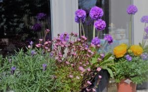 Balcon fleuri avec des primulas
