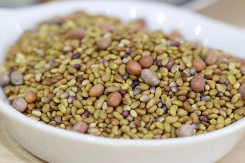 Graines à germer de trèfle, radis et alfalfa