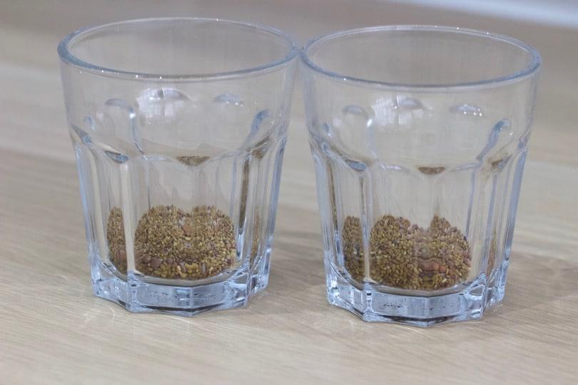 Graines germées de trèfle, radis et alfalfa