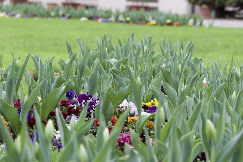 Parc du jardin du pavillon d'été royal à Prague