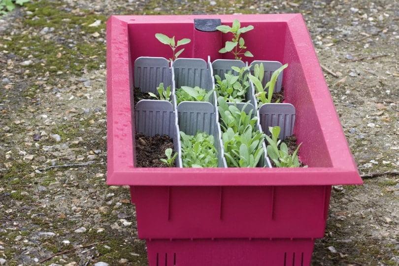 Plantations de printemps des semis dans la jardinière Calipso