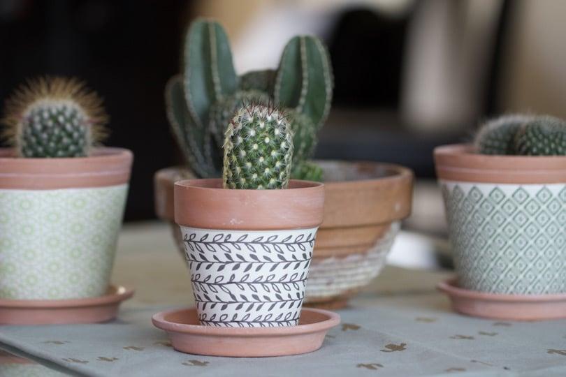 Cactus d'intérieur dans un cache pot Truffaut