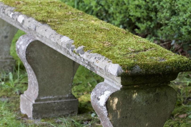 Se poser sur un petit banc de mousse derrière la pièce d'eau de la Baigneuse au château de Courances