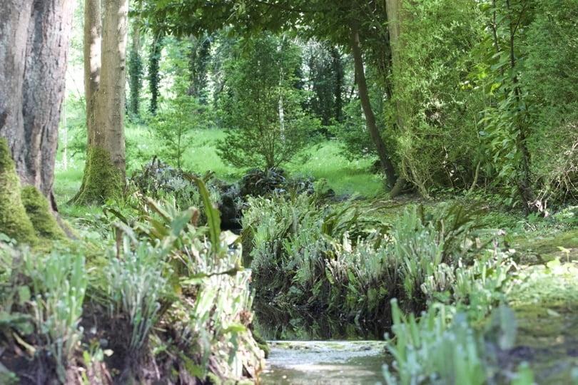 Source au coeur de la forêt du château de Courances