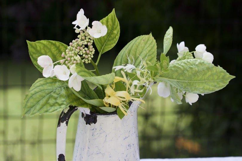 Hortensias dans un broc pour une table d'été romantique.