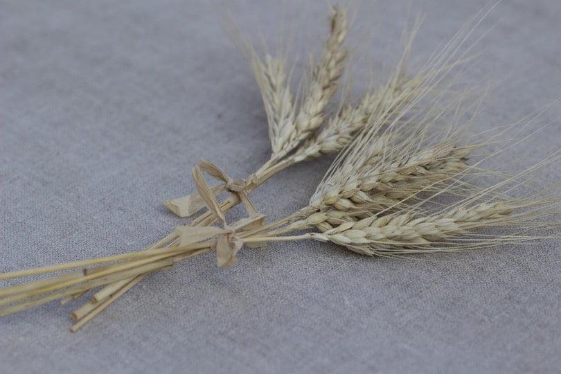 Un brin de blé pour une table d'été champêtre.