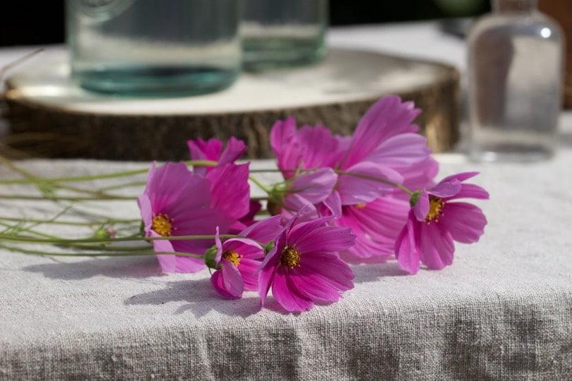Des cosmos pour une jolie table d'été champêtre.