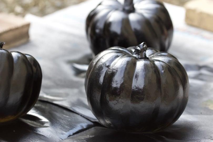 Scotche pour coloquintes d'Halloween noires