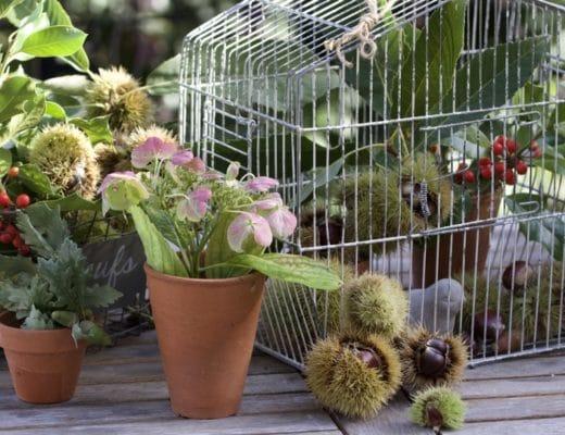 Cueillette d'automne : châtaignes, houx pour détourner une cage à oiseaux vintage