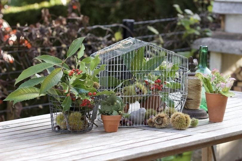 Détourner une cage à oiseaux au jardin avec des fruits d'automne.