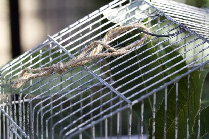 De la ficelle pour suspendre la cage à oiseaux vintage