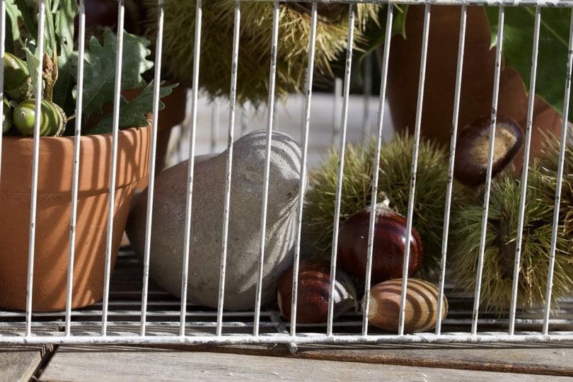 Installation des châtaignes dans la cage à oiseaux vintage