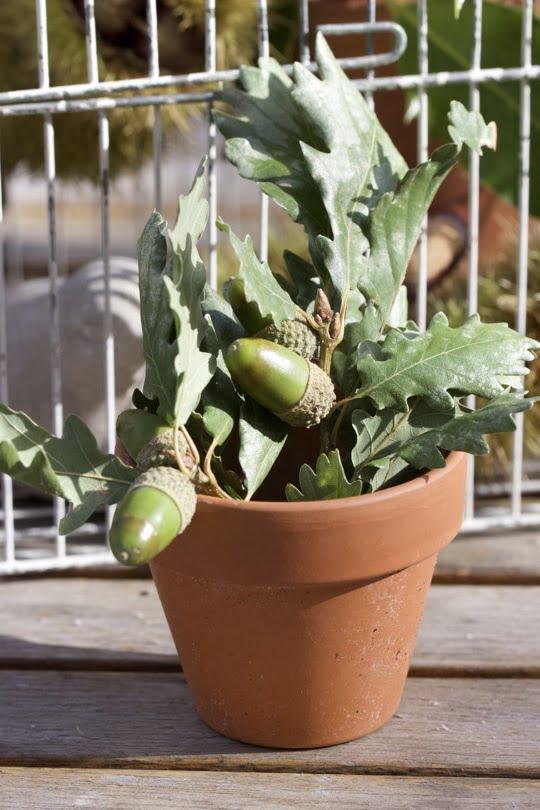 Décorer des pots en terre cuite avec des glands pour une décoration d'automne.