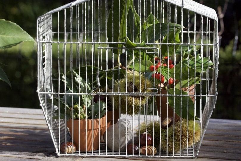 Détourner une cage à oiseaux au jardin