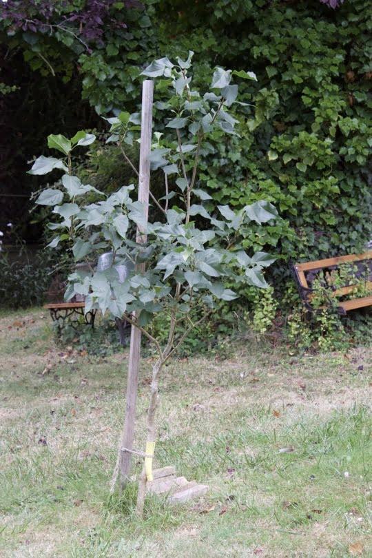 Protection du lilas au milieu du jardin