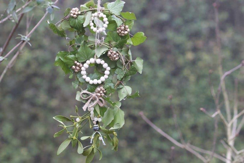 De petites couronnes de lierre pour accueillir la nouvelle année