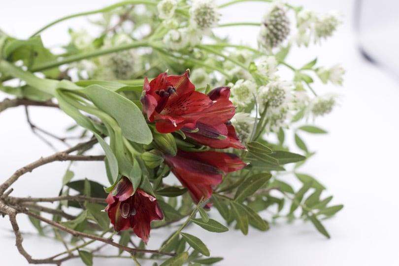 Végéraux pour Ikebana, art floral japonais.