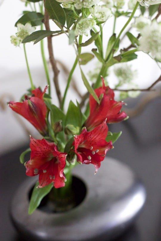 Fleur d'alstomère piquée dans un kenzan