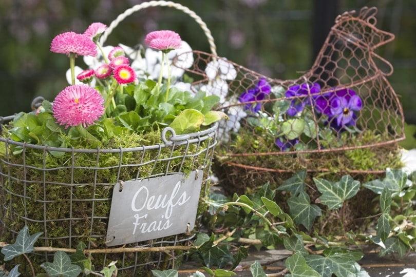 Décorer son jardin pour Pâques avec des pensées et des pâquerettes